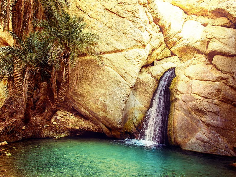 Tunisian Nature