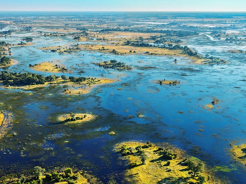 Okovango Grassland