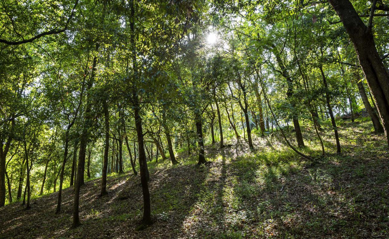 La natura di Montescudaio Village, immerso nel bosco