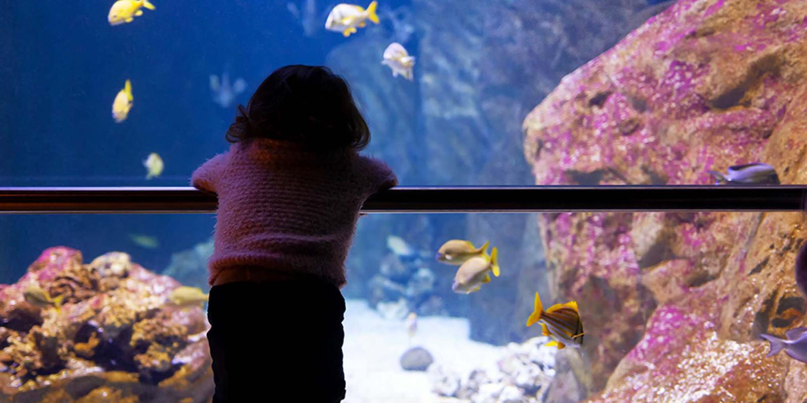 Gita in famiglia all'acquario di Livorno in Toscana