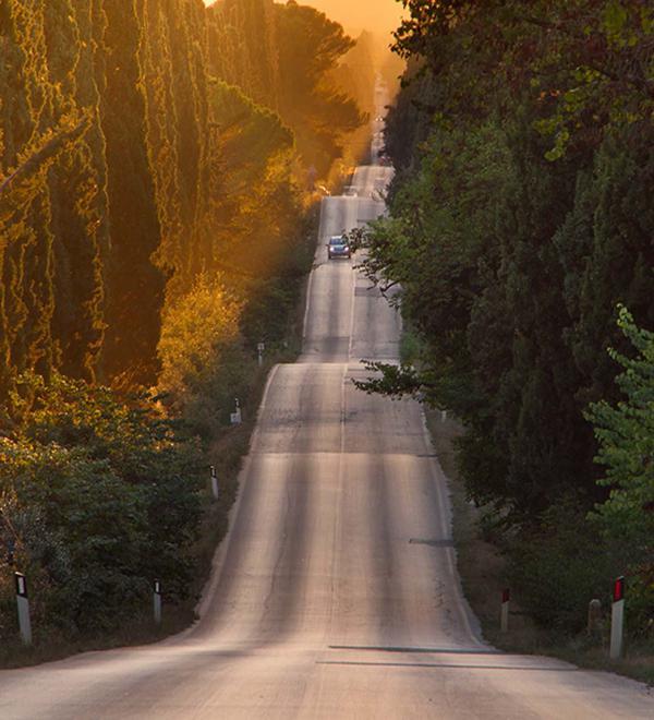 Cipressi strada per Bolgheri