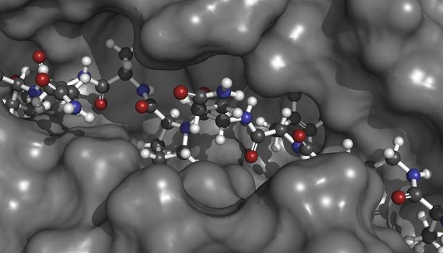 Proteina celiaci | Pazienti.it