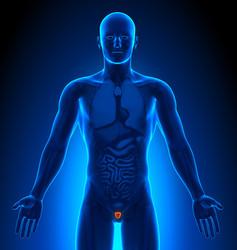 Cistite negli Uomini: Primo Piano dell'Apparato Genitale Maschile Colpito da Infezione del Tratto Urinario