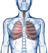 Thrombophlebitis di sintomi muscolari gastrocnemius