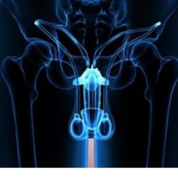 Scroto Gonfio nell'Apparato Genitale Maschile
