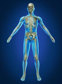 Apparato muscolare e scheletrico (muscoloscheletrico) | Pazienti.it