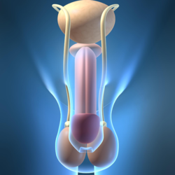 Circoncisione