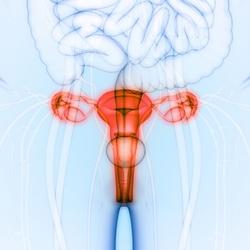 Diaframma anticoncezionale