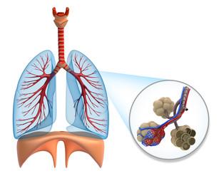 Bronchite cronica
