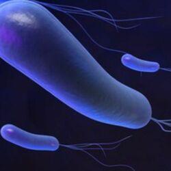 Helycobacter Pylori in primo piano