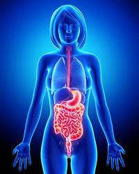 Apparato digestivo