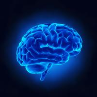 Cervello | Pazienti.it