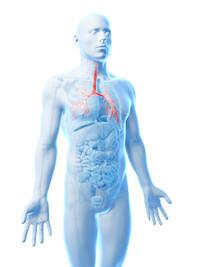 Broncografia | Pazienti.it