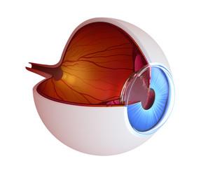 Leucomi corneali