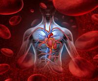 I consigli del cardiologo per un cuore sano