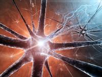 Sistema nervoso | Pazienti.it