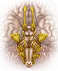 Nervo spinale