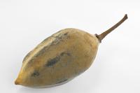 Baobab | Pazienti.it