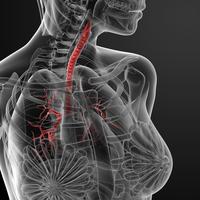 Trachea | Pazienti.it