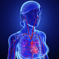 Vettocardiografia