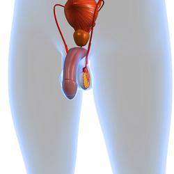 Aspermia (mancanza di sperma)