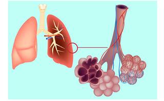 Alveolo polmonare