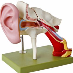 Nervo acustico