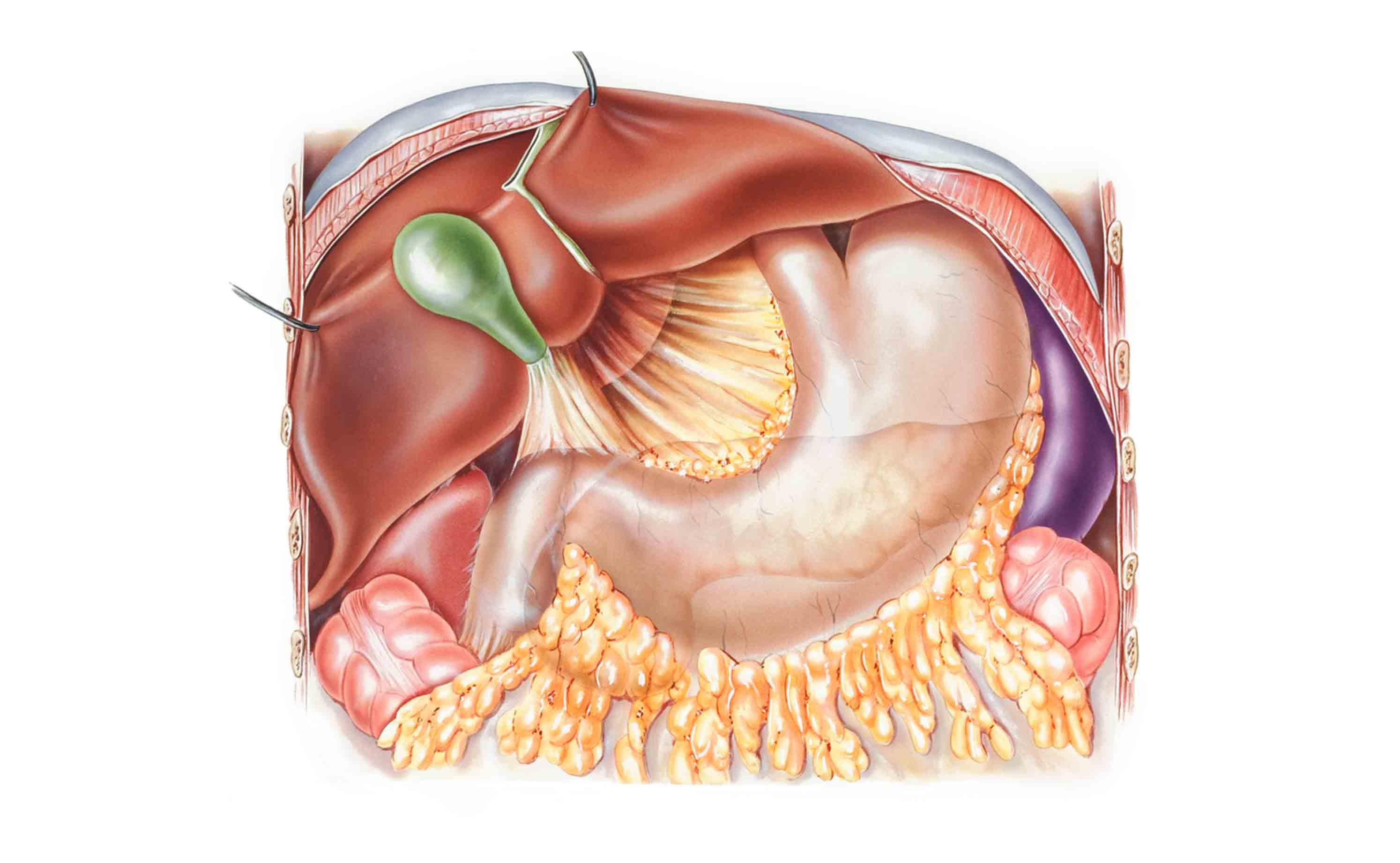 Asombroso Anatomía Región Inguinal Ornamento - PostMetro