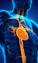 Cardioptosi
