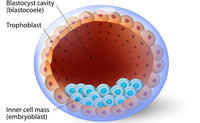 Blastocisti | Pazienti.it
