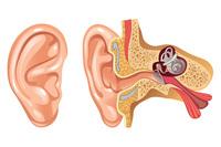 Rottura del timpano | Pazienti.it