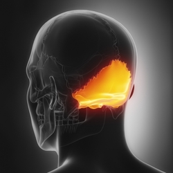 osso occipitale