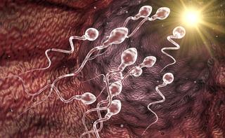 Criptozoospermia