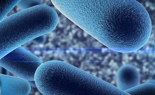 Lattobacilli (probiotici o microbiota)