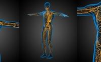 Sistema linfatico | Pazienti.it