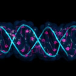 RNA in Primo Piano nelle Cellule