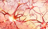 Neuroni | Pazienti.it