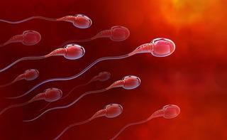 Test di vitalità degli spermatozoi