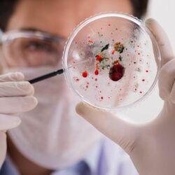 Virus Osservati al Microscopio da uno Scenziato