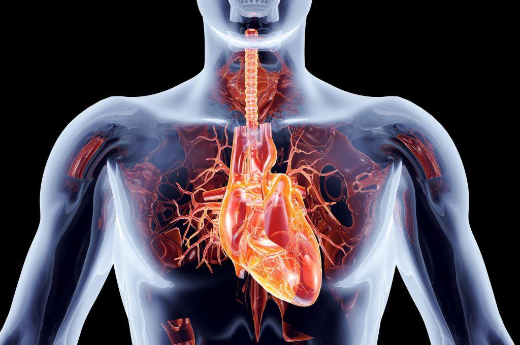 Monitoraggio della Pressione Arteriosa nelle 24 H