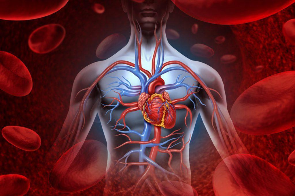 Cuore e massa muscolare: qual è il legame?