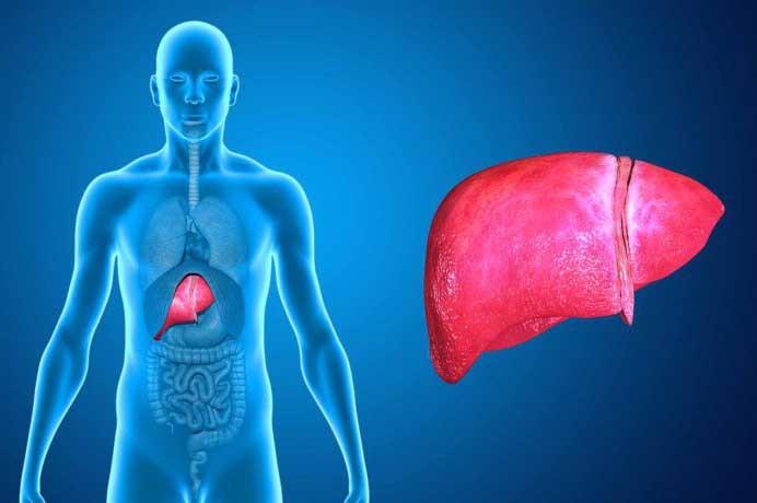 fegato ed epatite