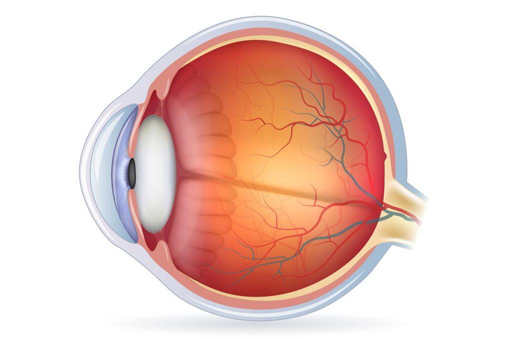 Sintomi e cause della trombosi all'occhio