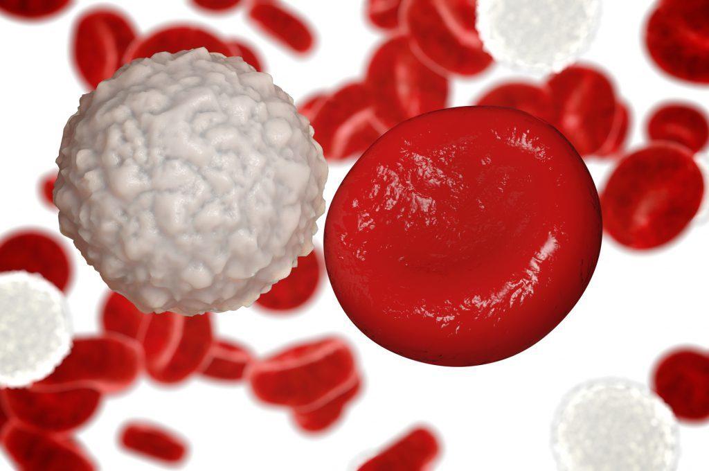 Leucemia Mieloide Cronica: le terapie