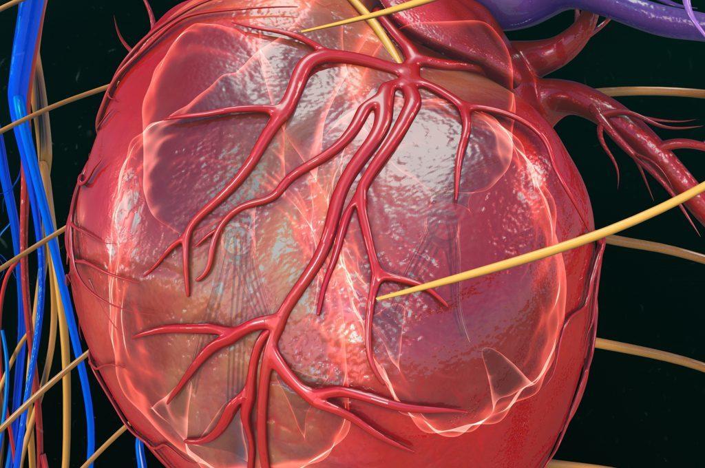 Ecocardiogramma transesofageo: come funziona, rischi, come si esegue l'esame