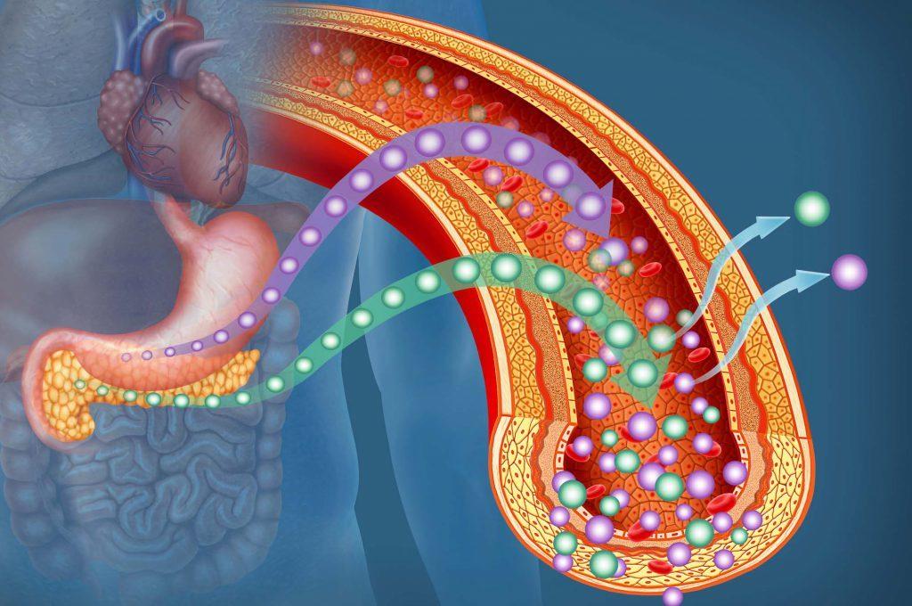 Pancreas e Diabete nelle Donne