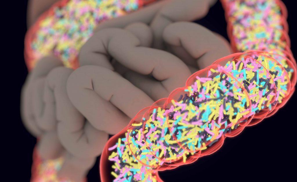 microbiota: qual è la funzione