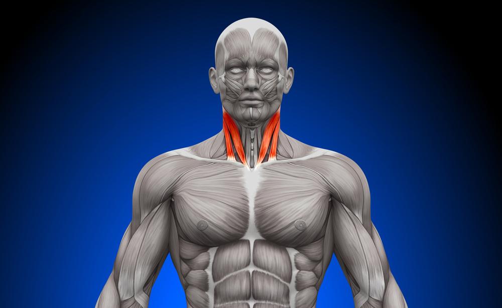 Circonferenza del collo e Rischio Apnee
