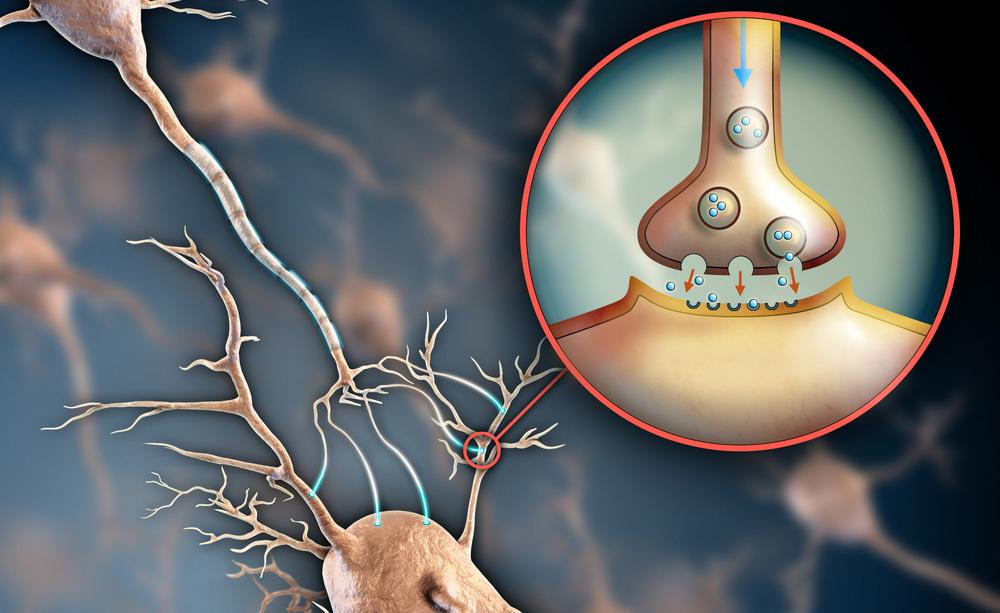 serotonina e alimentazione