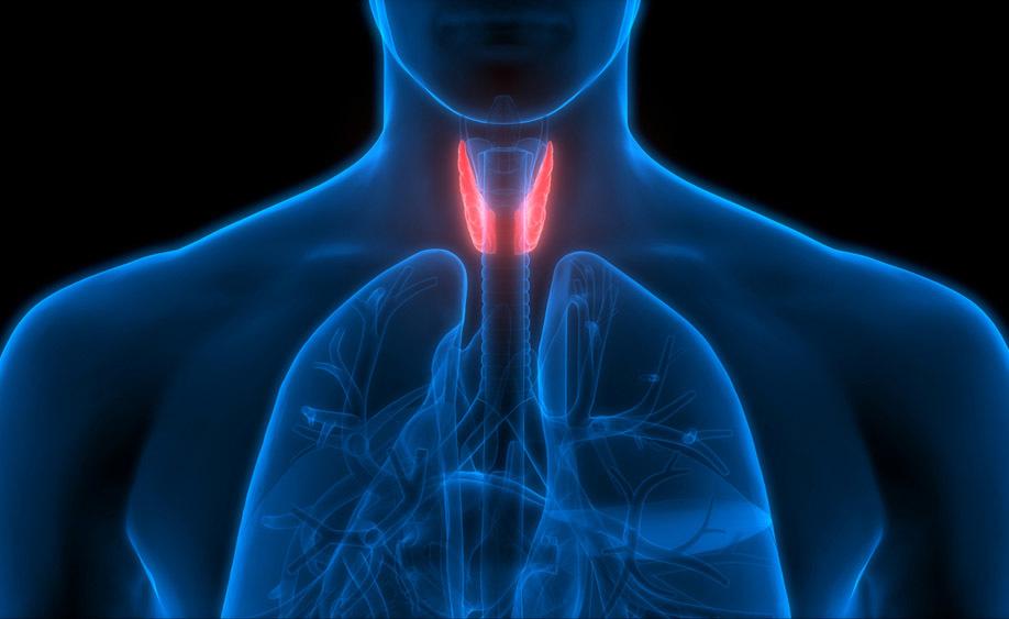 Tiroide e Apnee notturne